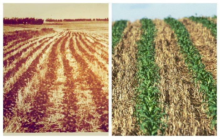 PD ontem e hoje: primórdios do plantio direto nos anos 1970 na fazenda Rhenânia, em Rolândia (PR), e práticas atuais