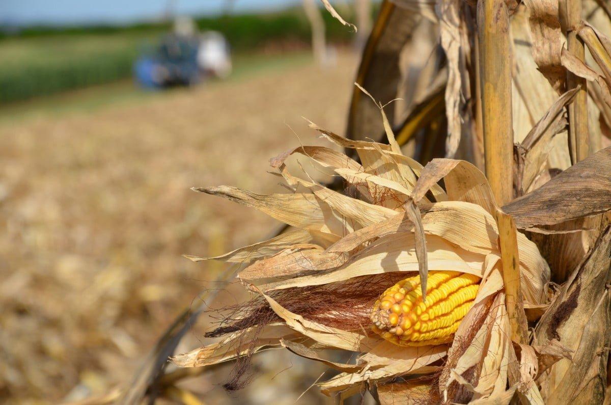 O que é segurança alimentar?