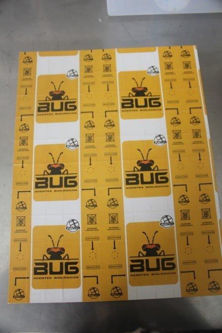 Cartela cheia de ovinhos de vespas produzida pela Bug: inovação sustentável contra as pragas agrícolas.