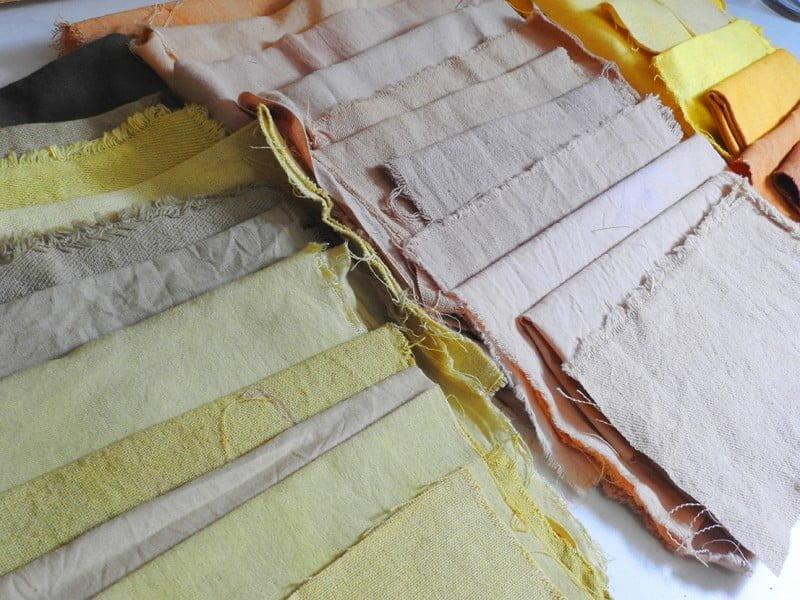 O tingimento dos tecidos de fibras naturais da Mattricaria dura, no mínimo, três dias (foto: Luis Tajes).