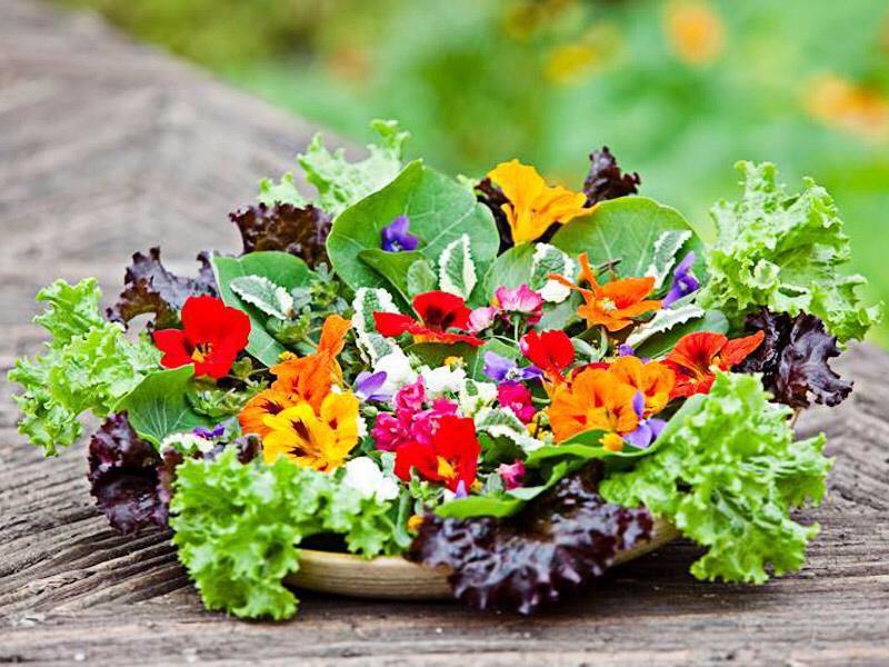 Parece um buquê de flores, mas são temperos não convencionais que Carol, do Minhas Plantas, apresenta ao seu público.