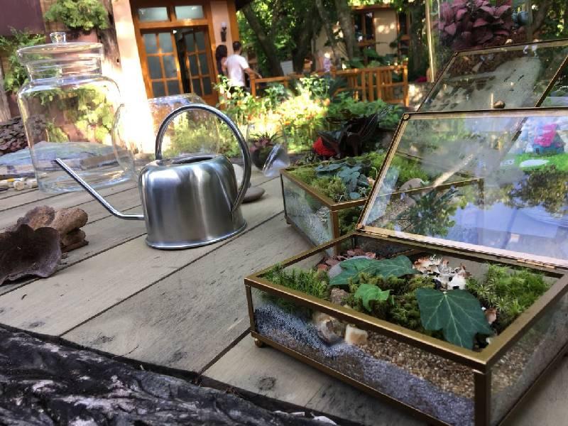 Quem acessa o Minhas Plantas encontra, em texto e em vídeo, tutoriais montados por Carol para simplificar o dia a dia da jardinagem.