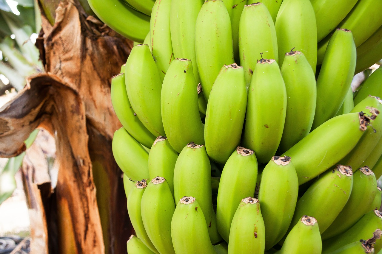 Não adianta colher o fruto (ou a ideia) antes da hora.